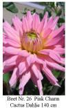 Dahlie08-26-Pink_Charm-C_small.jpg