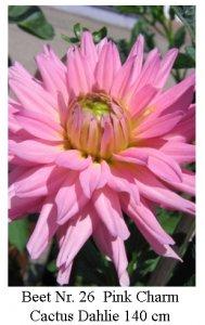 Dahlie08-26-Pink_Charm-C.jpg