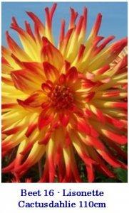 Dahlie2010-16-Lisonette-T.jpg