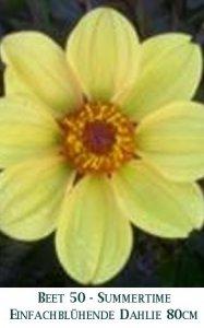 Dahlie2011-50-Summertime-T.jpg