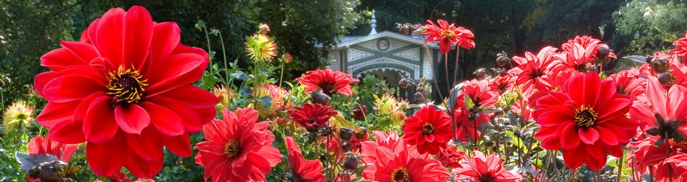 Titelbild Dahliengarten Baden Baden